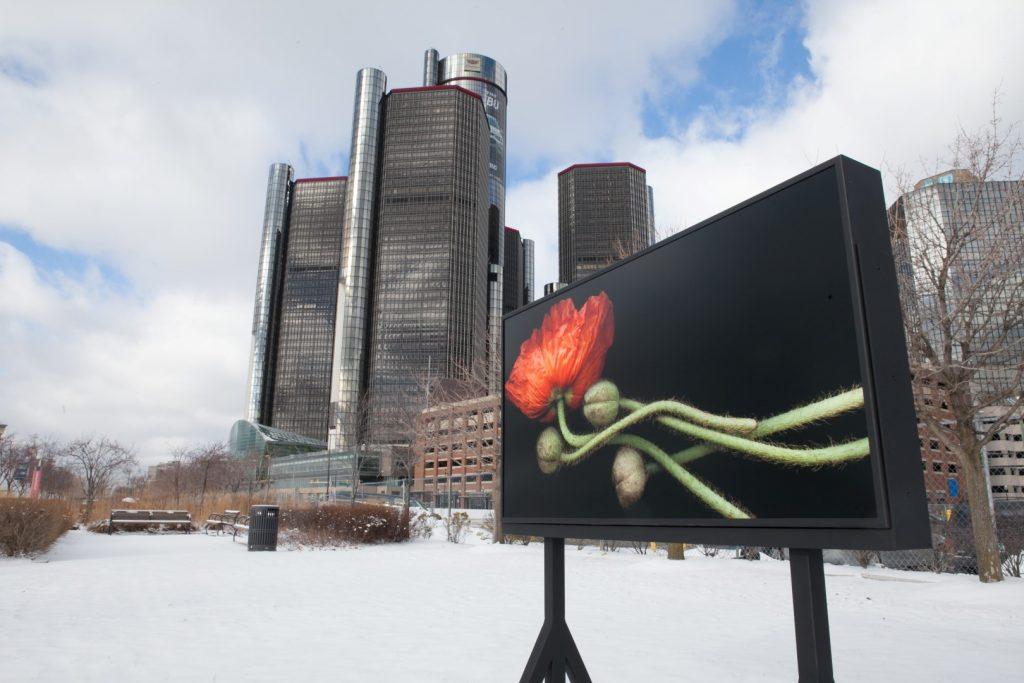 oriental-poppy-detroit-riverfront-large